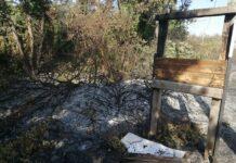 pineta campomarino